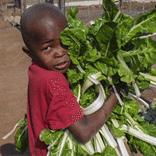 Harvests of Hope Website Design and Development